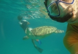 Jerome Gaspard - cascadeur - performance (38) - apnee snorkling tortue
